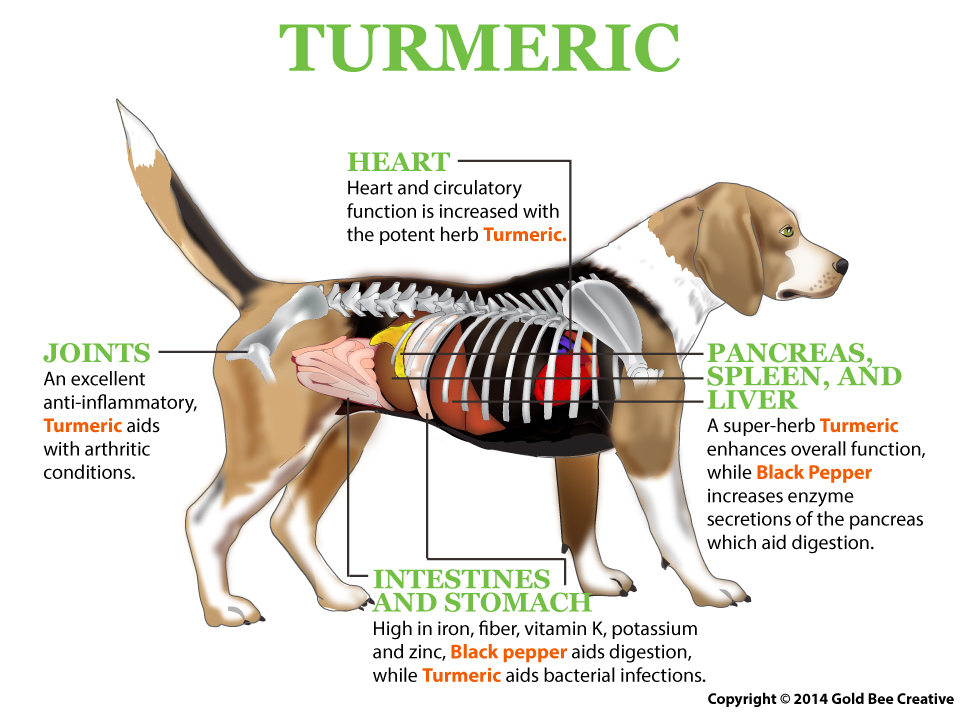 Turmeric For Dogs in North Kitsap County - The Lucky Pup